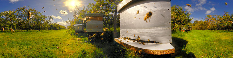 Bees at the Beehive by Dieter Kik