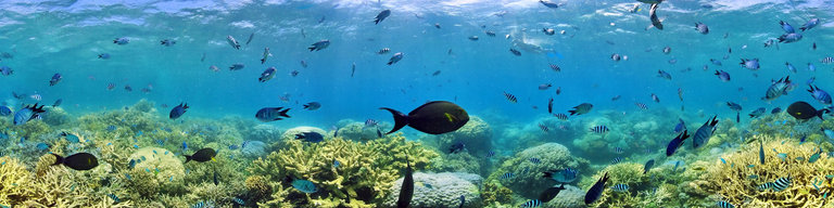 Amedee Coral Reef by Richard Chesher