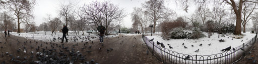 4 Pigeons in St James Park